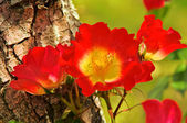 Rose on tree trunk 01 — Stock Photo