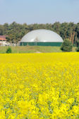 Biogas plant rape field 02 — Stock Photo