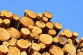 Stack of wood 35 — Stock Photo