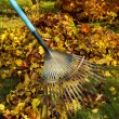 Foto de Stock  : Leaves rake 03