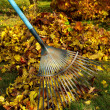 Stock fotografie: Leaves rake 03