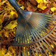 Stock Photo: Leaves rake 04