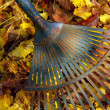 Foto Stock: Leaves rake 04