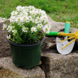 Stock Photo: Shrub planting 04