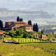 Stock Photo: Tuscany vineyard 03