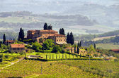 Tuscany vineyard 03 — Stock Photo