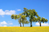 Meadow and cork oaks 23 — Stock Photo
