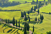 Cypress curve 41 — Stock Photo