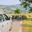 Sheeps on the road 01 — Stock Photo