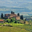 Tuscany vineyard 04 — Stock Photo