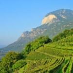 Trentino 04 — Stock Photo #10480218