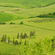 Tuscany hills 57 — Stock Photo #10496748