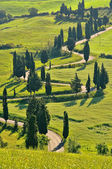 Cypress curve 40 — Stock Photo