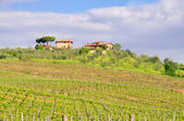 Tuscany vineyard 02 — Stock Photo