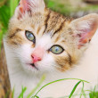Kitten 02 — Stock Photo #10595018