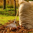 Leaves rake 12 — Stockfoto