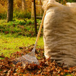 Stock Photo: Leaves rake 12