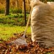 12 yaprak rake — Stok fotoğraf