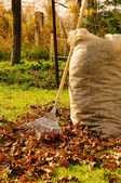 Leaves rake 12 — Stock Photo