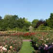 Rose Garden Panorama of the Regent Park — Stock Photo