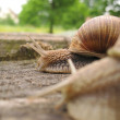 Snail — Stock Photo #10110611