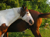 Horses, two horses in the park — Stock Photo