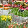 Tulips on sale — Stock Photo #10187563