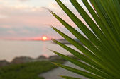 Palm leaf with sunset — Stock Photo