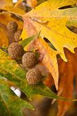 Folhas de Outono com culturas — Fotografia Stock