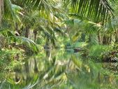 Coconut palm relections - backwaters, Kerala, India — Stock Photo