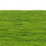 Texture of Tea Plantation in Kenya — Stock Photo