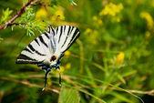 Butterfly närbild gröna — Stockfoto