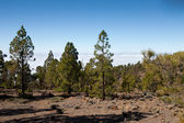 Mount teide at 3200 meters — Stock Photo