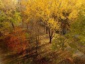 Autumn natural landscape panoramic — Stock Photo