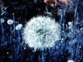Dandelions in space fantasy abstract background — Stock Photo
