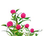 çiçek blossom.pink çiçek. — Stok fotoğraf