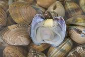 Muscheln im Wasser — Stockfoto