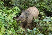Chitwan nationalpark, nepal — Stockfoto