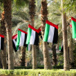Flags of UAE — Stock Photo