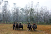 Giro in elefante a giungla chitwan, nepal — Foto Stock
