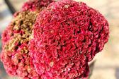 Decorative Red Flower — Stock Photo