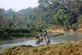 Elephant ride throught the jungle, Chitwan — Stock Photo
