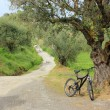 Cycling in the nature, Zante island, Greece — Stock Photo