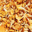 Chanterelle — Stock Photo #10117497