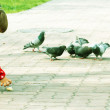Little boy feeds pigeons — Stock Photo