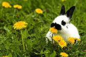 Conejo moteado — Foto de Stock