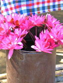 Blumen im topf — Stockfoto