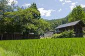 Zielony łąka do domu — Zdjęcie stockowe