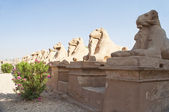 Temple of Karnak, Egypt — Stock fotografie