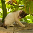 Kitten on Samos — Stock Photo